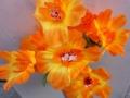 Gerbera portocalie
