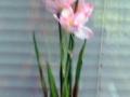 Liliac roz