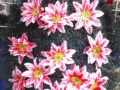 Coroana din brad artificial mare cu crin rosu si alb 16 buc