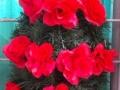 Coroana din brad artificial mic cu trandafir rosu 12 buc