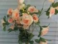 Trandafir piersica buchet mic 2